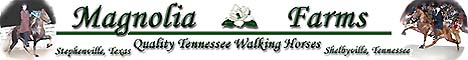 Magnolia Farms - Quality Tennessee Walking Horses in Texas and Tennessee